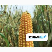 ЛГ 30273 (ФАО 260) гибрид кукурузы ЛИМАГРЕЙН (Limagrain)