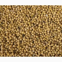 Амурская соя. Крупный опт, от Производителя. Soy. Soya beans. Amur region