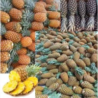 Продам ананас оптом