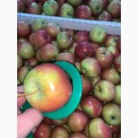Продам яблоки 1 сортов