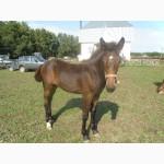 Предлагаем на продажу ферму лошадей