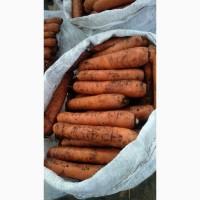 Купим морковь от 20 тонн в Белоруссии