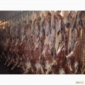 Продам мясо Halal