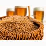 Продам ячмень пивоваренный