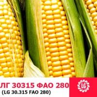 ЛГ 30315 (ФАО 280) гибрид кукурузы ЛИМАГРЕЙН (Limagrain)