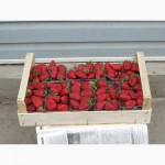 Шпоновые ящики для упаковки ягод, фруктов в и овощей АР КРЫМ