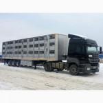Перевозка скотовозами по России и зарубежью