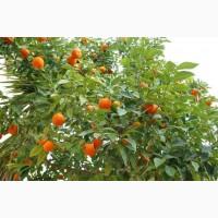 Продаю сельхоз-бизнес в Абхазии