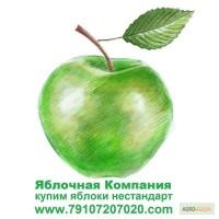 Купим яблоки для переработки (для садоводов-производителей цены выше рыночной)