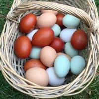 Продам яйцо домашних кур, выращенных на кормах без добавления стимуляторов и антибиотиков