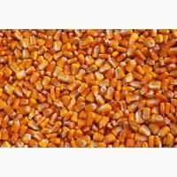 Семена кукурузы и подсолнечника