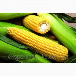 Гибриды семена кукурузы Лимагрейн (Лимагрейн, Limagrain)