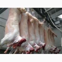 Оптовая продажа мясо баранина Халяль