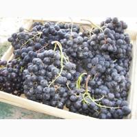 К оптовой продаже готов виноград Мерседес по цене от производителя