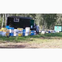 Продам пчел в Искитимском районе