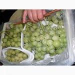 Ищу оптовых покупателей на итальянский столовый виноград сортов Italia, Red Glob
