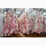 Закупаем оптом говядину в полутушах и четвертинах