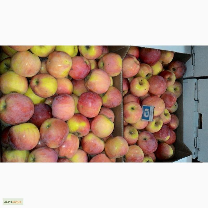 россия яблоки фото