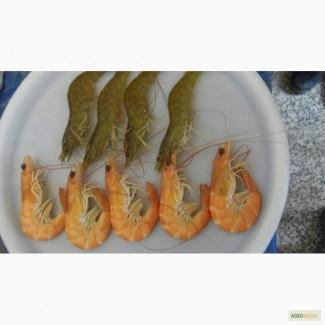 Креветки из Ирана оптом