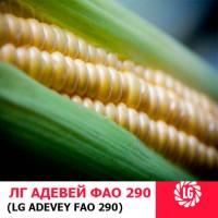 АДЭВЕЙ (ФАО 300) гибрид кукурузы ЛИМАГРЕЙН (Limagrain)