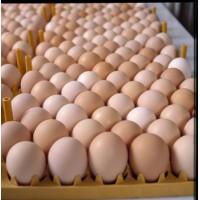 Оптовые поставки Яйца куриного лучшего качества