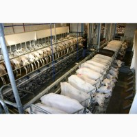 Доильный зал для коз, овец, крс под ключ с монтажом и обучением персонала по ГОСТ