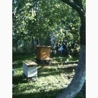 Продам пчел, мед и др.продукты пчеловодства