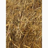 Солома овсяная, пшеничная напрямую из хозяйства