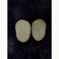 Картофель оптом с КФХ