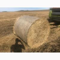 Продам солому пшеничную В ЛЮБОМ ОБЪЁМЕ