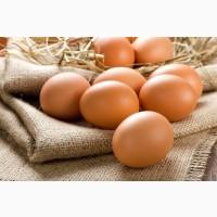 Продаю яйца диетические и столовые