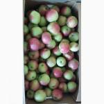 Яблоки Беларусские оптом от производителя 2-ой сорт
