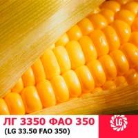 ЛГ 3350 (ФАО 340) гибрид кукурузы ЛИМАГРЕЙН (Limagrain)