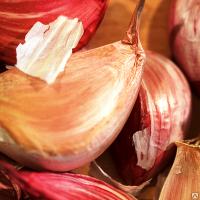 Семена чеснока озимого Любаша