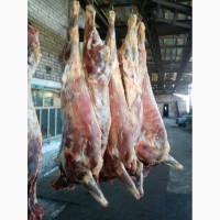 Предлагаем мясо говядины в полутушах оптом