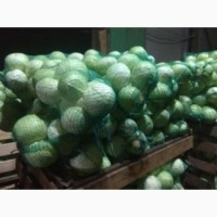 Продам овощи от Киргизкого производителя