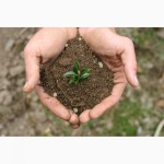 Рекультивант для торфо-сапропелевого почвообразования