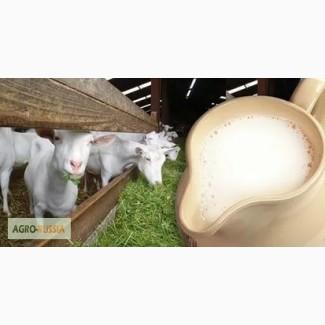 Козье молоко. Продам оптом