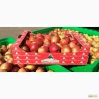 Продаем свежие яблоки, сорт Гала + 12 сортов