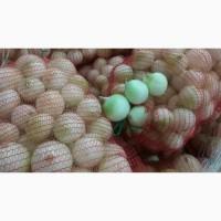 Белый лук оптом по ценам от производителя