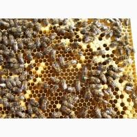 Пчелопакет Карника в Липецке