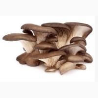 Вешенки грибы оптом
