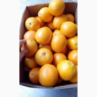 2-сорт Апельсин, для сока и переработки в Москве