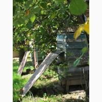 Продам семьи пчел породы КАРПАТКА