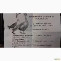 ООО Чановский гусивод реализует суточных гусят