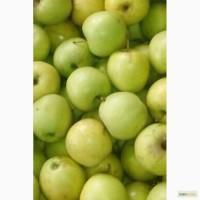 Яблоки Голден 1 сорт