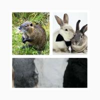 Продам шкуры кролика, нутрии