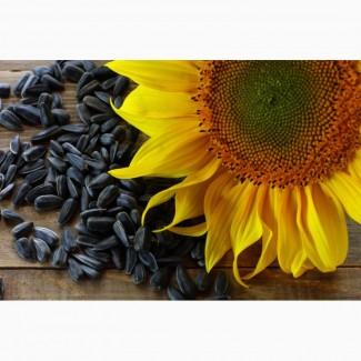 Семена подсолнечника (классические гибриды)