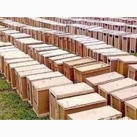 Помощь с покупкой пчело пакетов породи карпатка в Украине 2019 г