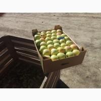 Яблоки Крым опт голден, симеренко, гренни смит, фуджи, бреберн
